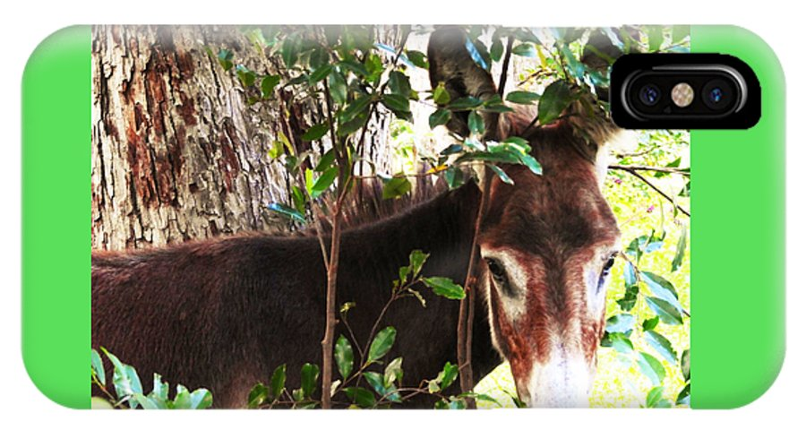 Equine IPhone X / XS Case featuring the photograph Camera Shy Donkey by Jan Gelders