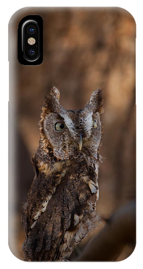 Eastern Screech-owl IPhone X / XS Case featuring the photograph Camouflage by Robert Shields