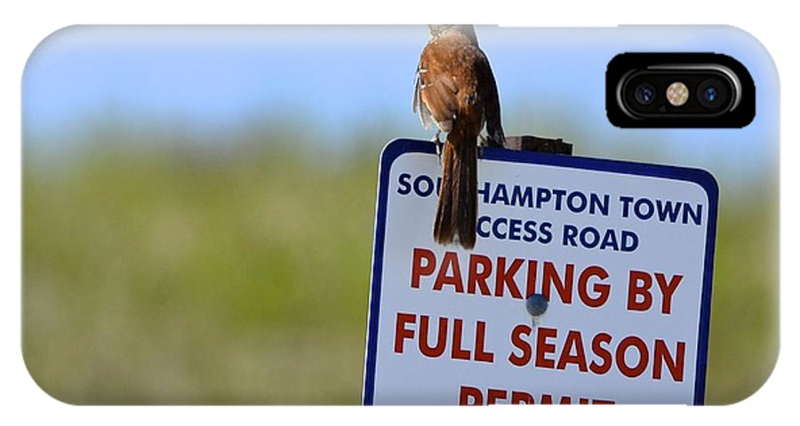 Brown Thrasher IPhone X Case featuring the photograph Can I Park Here? by Lorelei Galardi