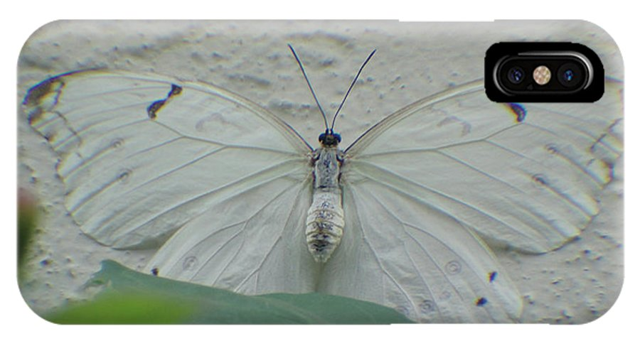 Butterfly IPhone X Case featuring the photograph Can You See Me by Cathi Abbiss Crane
