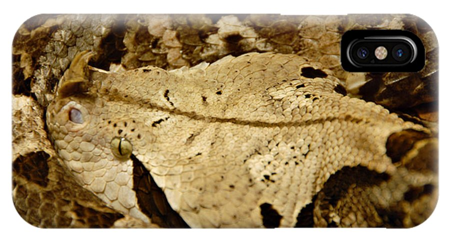 Snake IPhone X Case featuring the photograph Can you see me now. by Jacqueline Milner