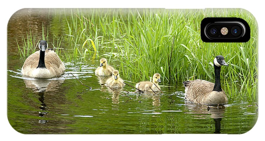 Canada Geese IPhone X Case featuring the photograph Canada Goose Family 2 by Sharon Talson