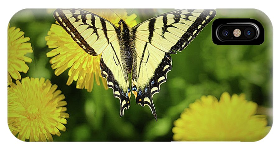 Butterfly IPhone X Case featuring the photograph Canadian Swallowtail Butterfly by Amber D Meredith Photography