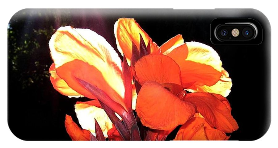Canna Lily IPhone X Case featuring the photograph Canna Lily by Will Borden