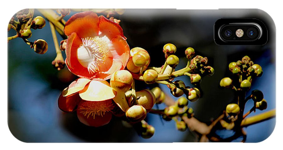 Cannoball IPhone X Case featuring the photograph Cannonball Flower by Sujith Gopinath