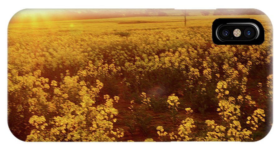 Sunburst IPhone X Case featuring the photograph Canola Sunburst by Cassandra Buckley