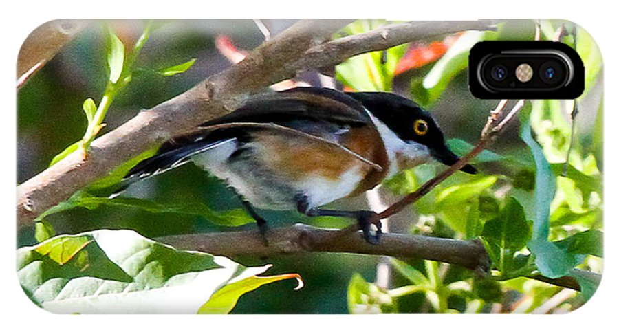 Cape Batis IPhone X Case featuring the photograph Cape Batis by Dave Whited