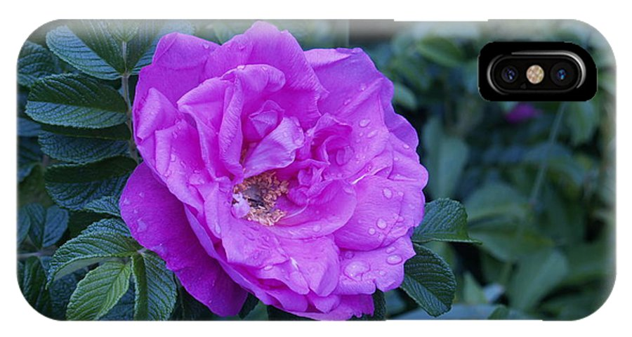Rose IPhone X Case featuring the photograph Cape Rose by Paul Galante