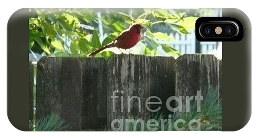 Bird IPhone X Case featuring the photograph Cardinal by Barb Montanye Meseroll