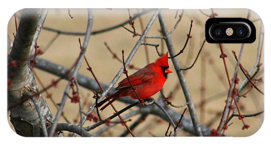Bird IPhone X Case featuring the photograph Cardinal by David Dunham