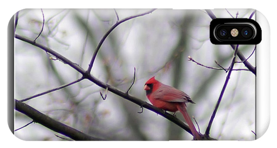 2d IPhone X Case featuring the photograph Cardinal Perched On A Branch by Brian Wallace