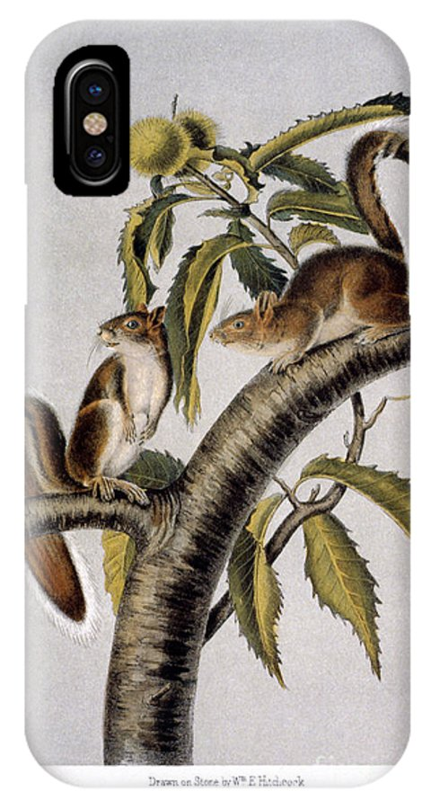 1846 IPhone X Case featuring the photograph Carolina Grey Squirrel by Granger