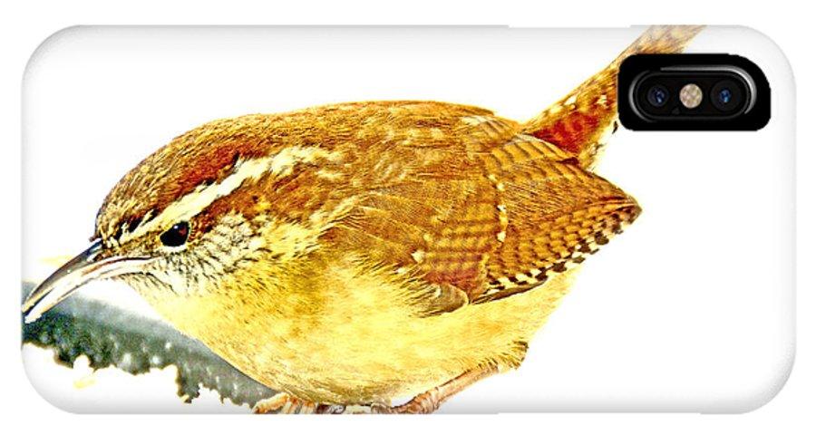 Carolina Wren IPhone X Case featuring the photograph Carolina Wren On Bird Feeder Animal Portrait by A Gurmankin