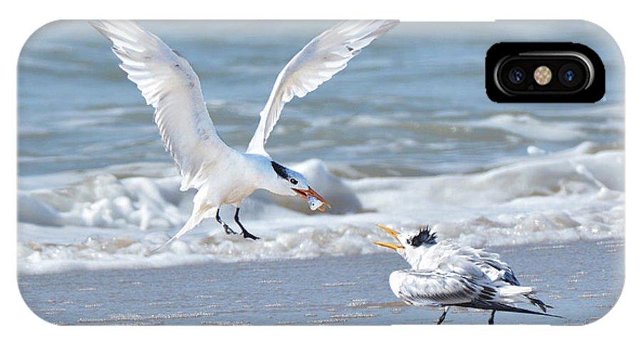 Bird IPhone X Case featuring the photograph Caspian Tern Feeding Young by Alan Lenk