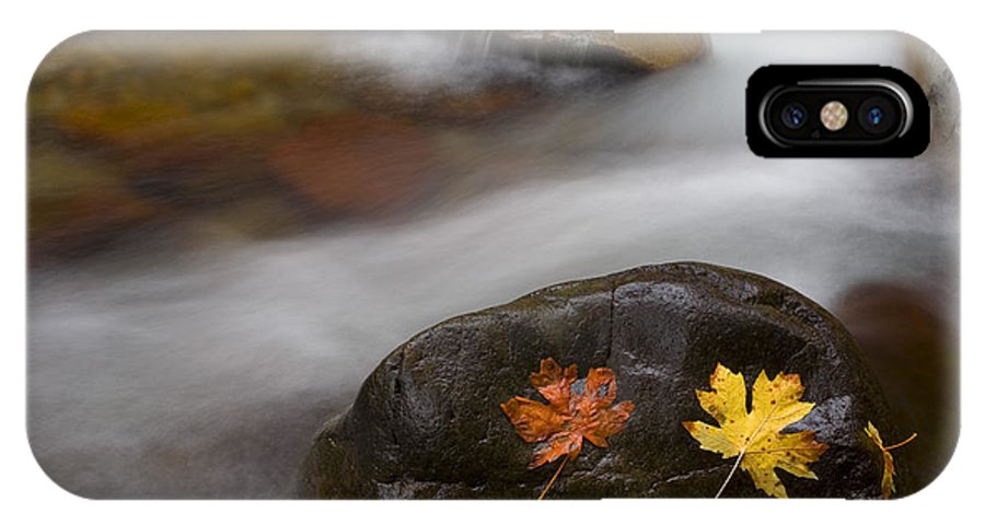 Leaves IPhone X Case featuring the photograph Castaways by Mike Dawson
