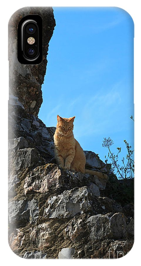 Cat IPhone X Case featuring the photograph Castle Cat by Louise Heusinkveld