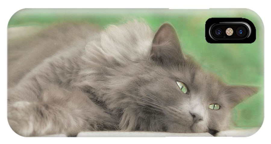 Pet IPhone X Case featuring the photograph Cat Chillax by Hal Halli