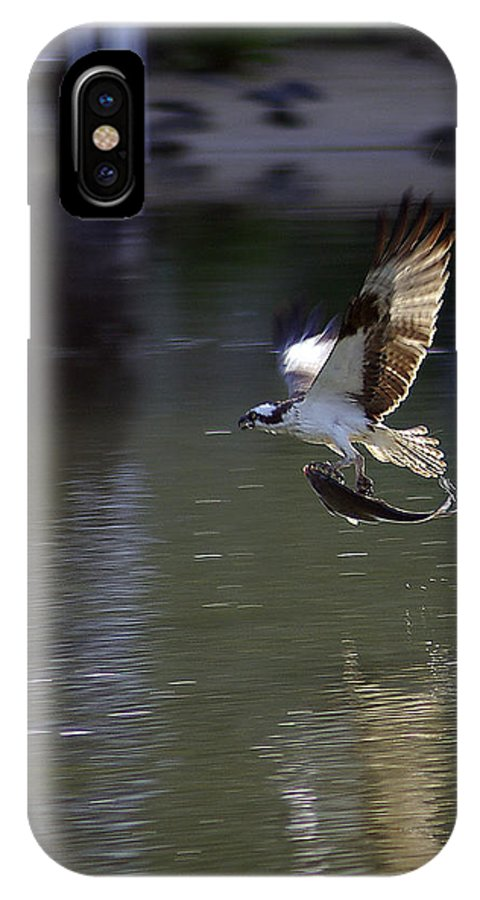 2d IPhone X Case featuring the photograph Catch Of The Day by Brian Wallace
