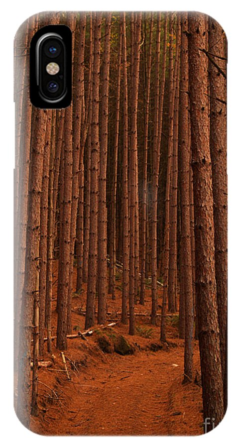 Trees IPhone X Case featuring the photograph Cathedral by Paul Galante