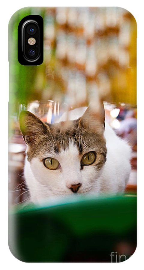 Cat IPhone X Case featuring the photograph Cat's Eye On Me by Sven Brogren