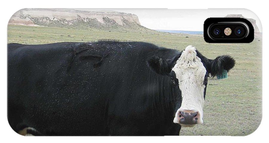 Rural IPhone Case featuring the photograph cattle at Pawnee Butte Colorado by Margaret Fortunato