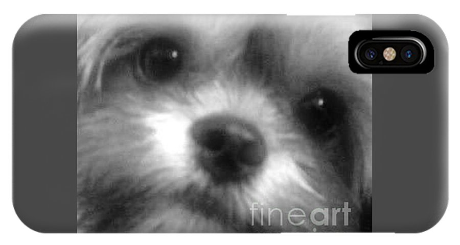 Shorkie IPhone X Case featuring the photograph Cc Our Baby by Buffy Heslin