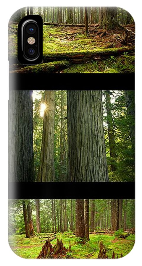 Cedar IPhone X Case featuring the photograph Cedar Forest Trio by Idaho Scenic Images Linda Lantzy