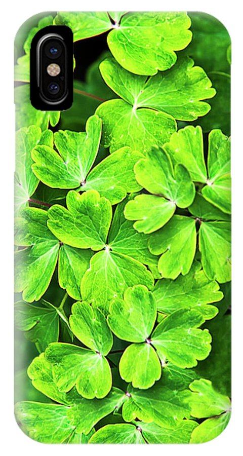 Green Leaves IPhone X Case featuring the photograph Certain Green by Christina Rollo