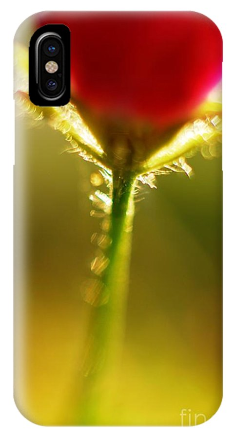 Macro IPhone X Case featuring the photograph Cha Cha Cha Tulip by Catherine Lau
