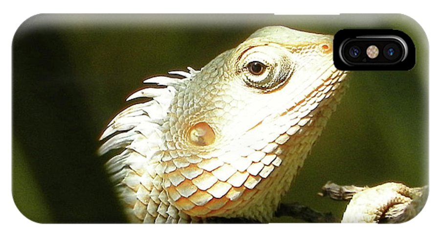 Chameleon IPhone X Case featuring the photograph Chameleon Up-close 1 by Gallery Hermana