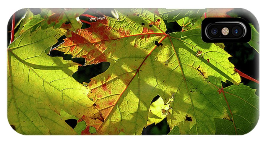 Ginger Woods IPhone X Case featuring the photograph Changing Colors by David Foote