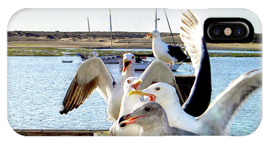 Sea Birds IPhone X Case featuring the photograph Chatty Seagull Birds by Haleh Mahbod