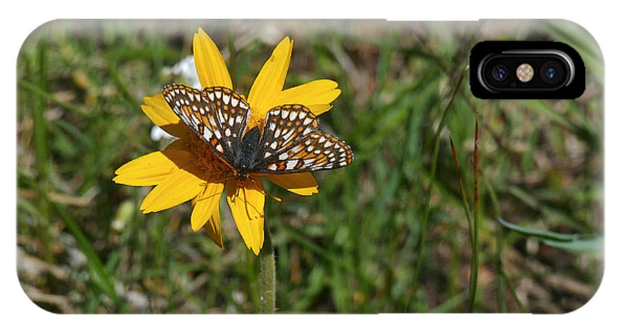 Ron Glaser IPhone X / XS Case featuring the photograph Checkerspot On Bahai Aster 1 by Ron Glaser