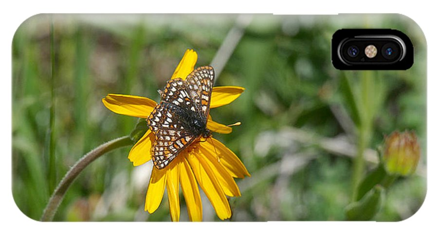 Ron Glaser IPhone X / XS Case featuring the photograph Checkerspot On Bahai Aster 3 by Ron Glaser