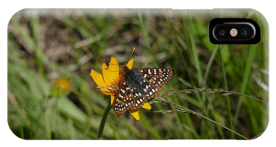 Ron Glaser IPhone X / XS Case featuring the photograph Checkerspot On Bahai Aster 4 by Ron Glaser