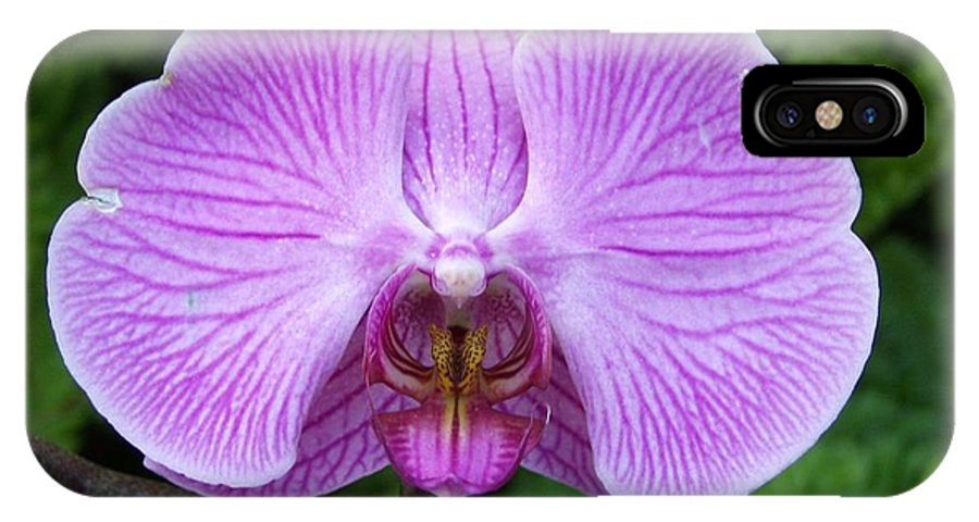 Orchid IPhone X Case featuring the photograph Cheetah In The Orchid by Carol Sweetwood