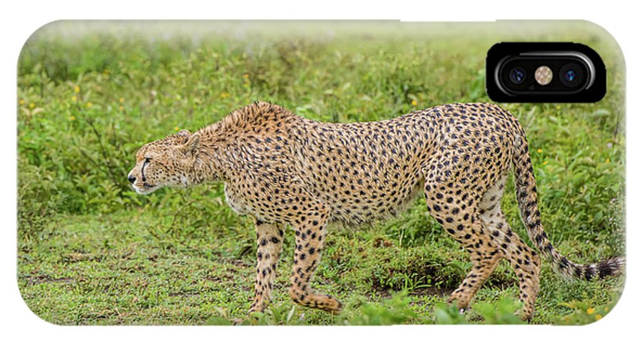 Cheetah On The Prowl IPhone X Case featuring the photograph Cheetah On The Prowl by Morris Finkelstein