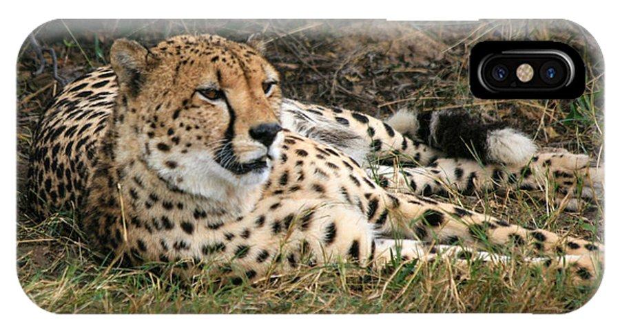 Karen Zuk Rosenblatt Art And Photography IPhone X Case featuring the photograph Cheetah Portrait by Karen Zuk Rosenblatt