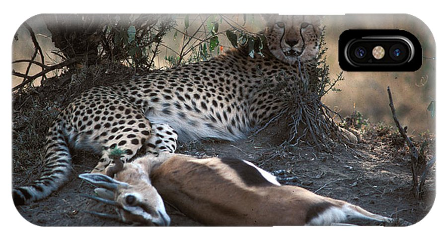 Spots IPhone Case featuring the photograph Cheetah With Kill by Carl Purcell