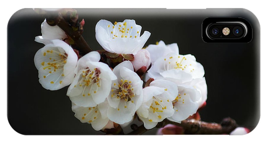 Art IPhone X Case featuring the photograph Apricot Blossom I by Joan Han