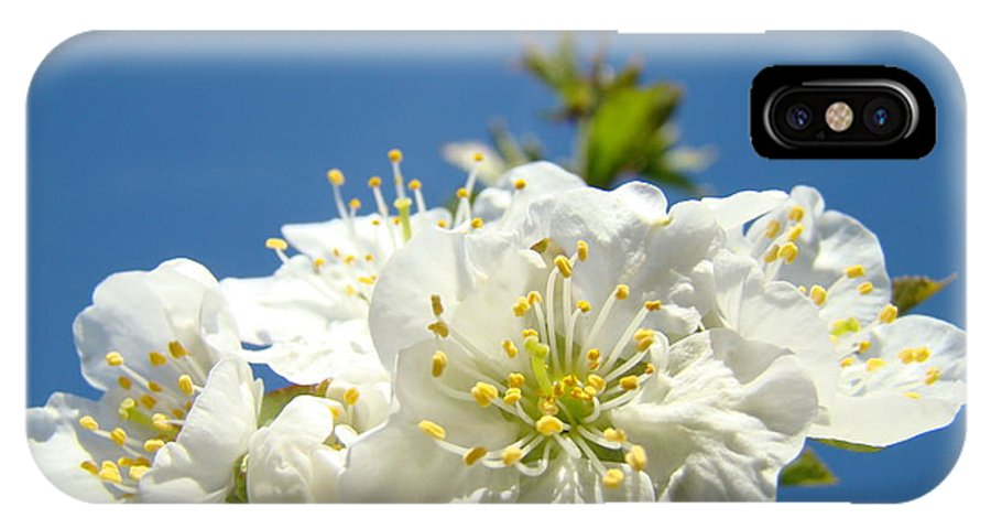 Blossom IPhone X Case featuring the photograph Cherry Blossoms Art White Spring Tree Blossom Baslee Troutman by Baslee Troutman
