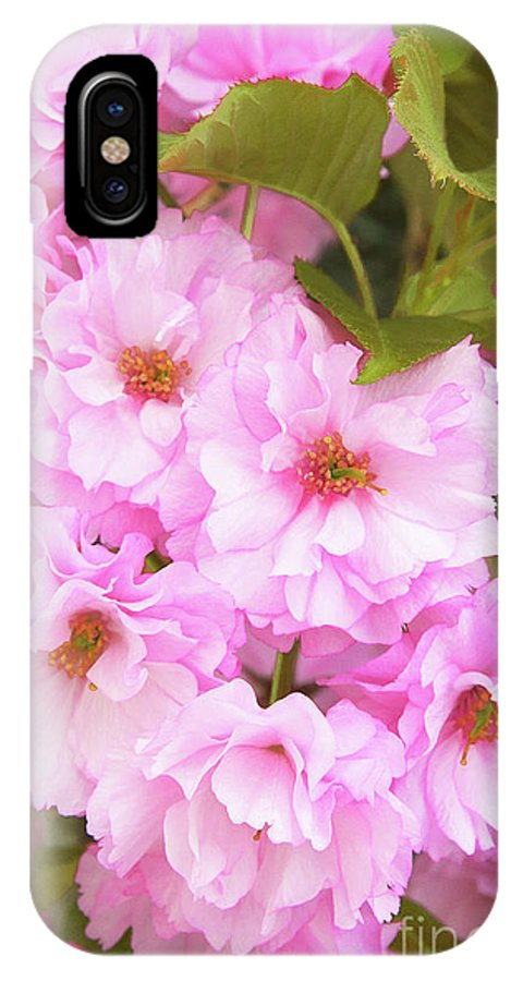 Cherry Blossoms IPhone X Case featuring the photograph Cherry Blossoms I by Regina Geoghan