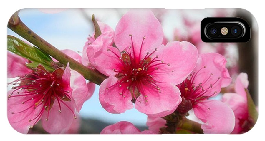 Cherry IPhone X Case featuring the photograph Cherry Blossoms by Tiffany Vest