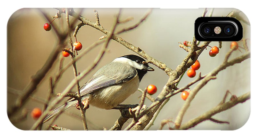Animal IPhone X Case featuring the photograph Chickadee 2 Of 2 by Robert Frederick