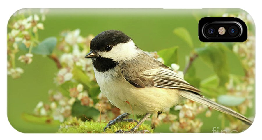 Bird IPhone X Case featuring the photograph Chickadee Mossy Spring Perch by Max Allen