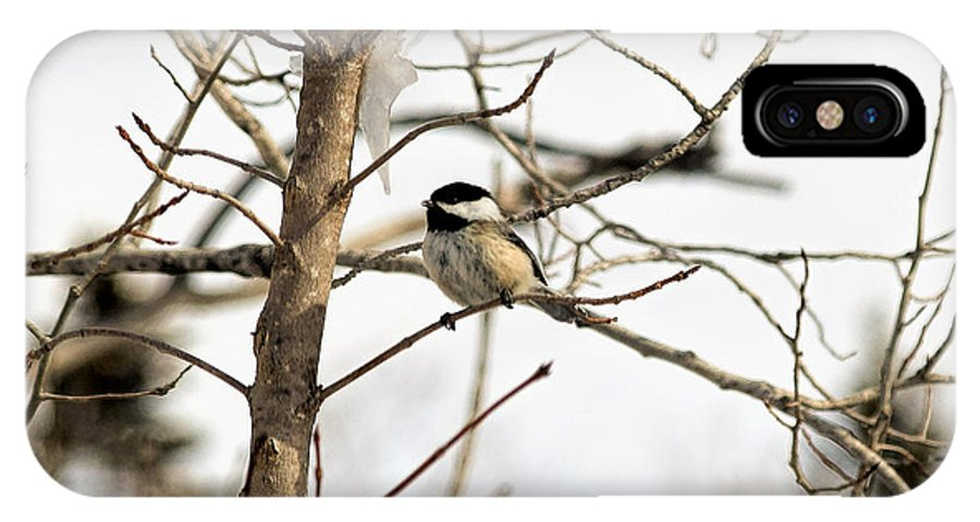 Black-capped Chickadee IPhone X Case featuring the photograph Chickadee by William Tasker
