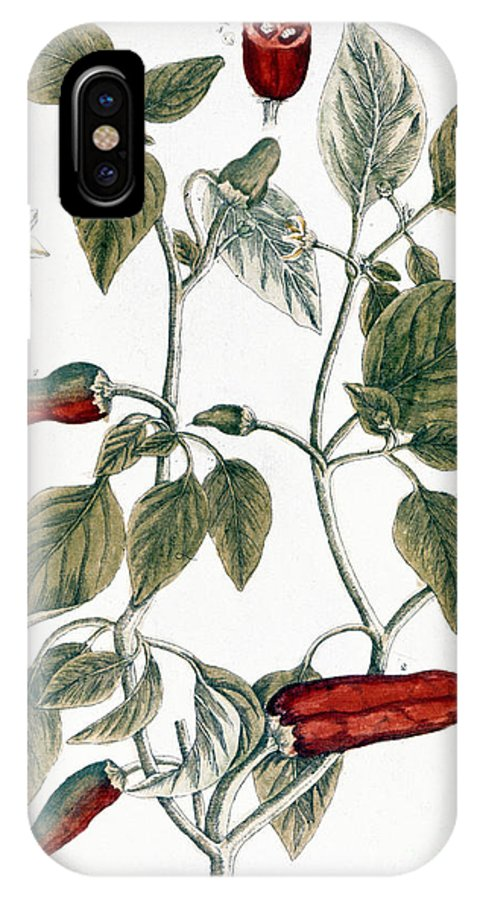1730s IPhone X Case featuring the photograph Chili Pepper, 1735 by Granger