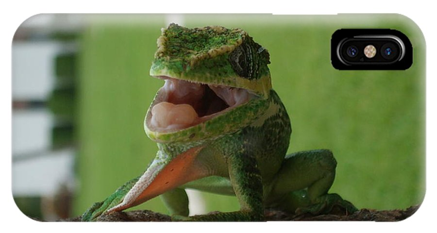 Iguana IPhone X Case featuring the photograph Chilling On Wood by Rob Hans