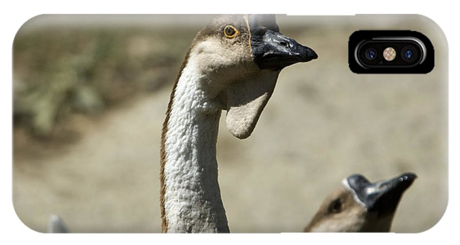 Photography IPhone X Case featuring the photograph Chinese Geese Anser Cygnoides At Zoo by Joel Sartore