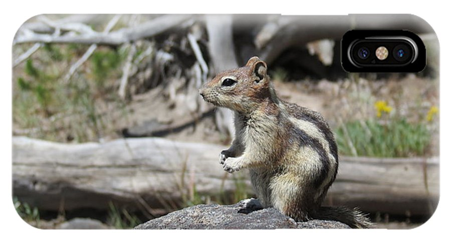 Chipmunk IPhone X Case featuring the photograph Chipmunk At Yellowstone by Ausra Huntington nee Paulauskaite